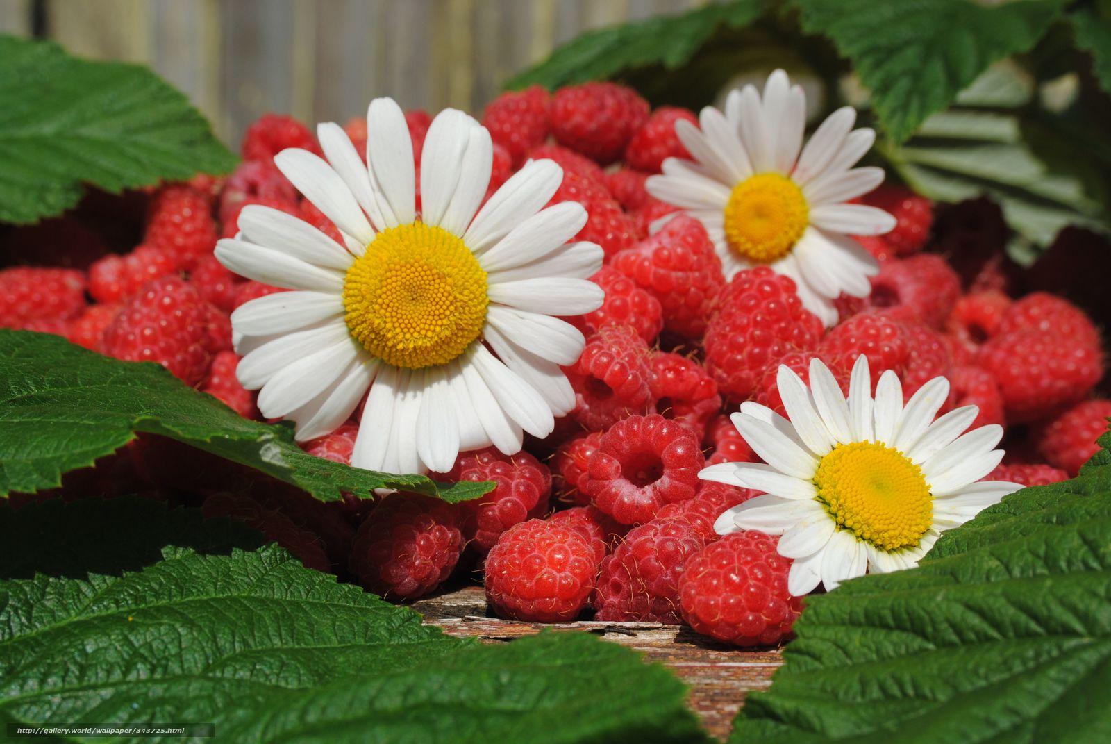 картинки лето цветы: