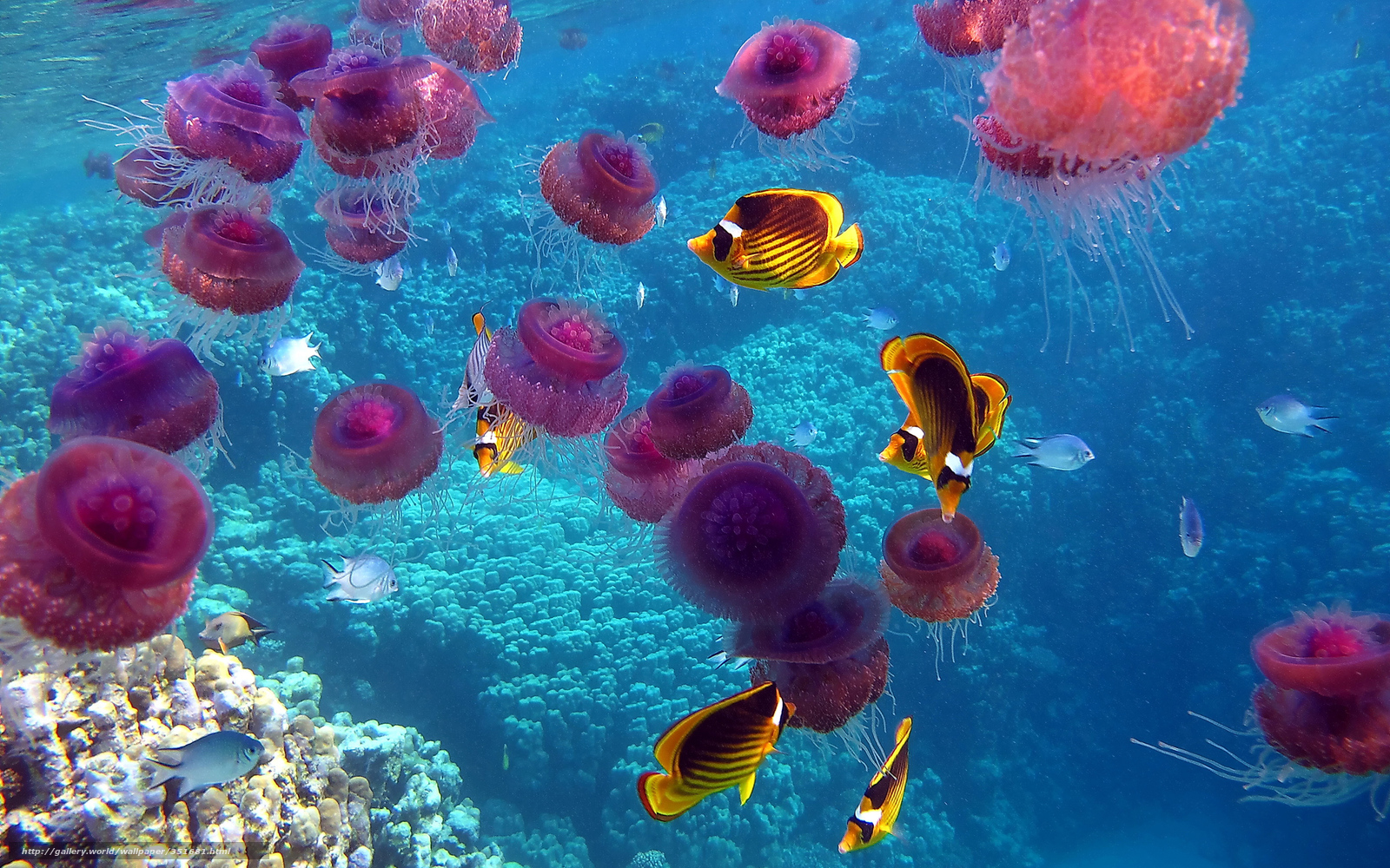 underwater Fish HD Wallpapers  Desktop and Mobile Images