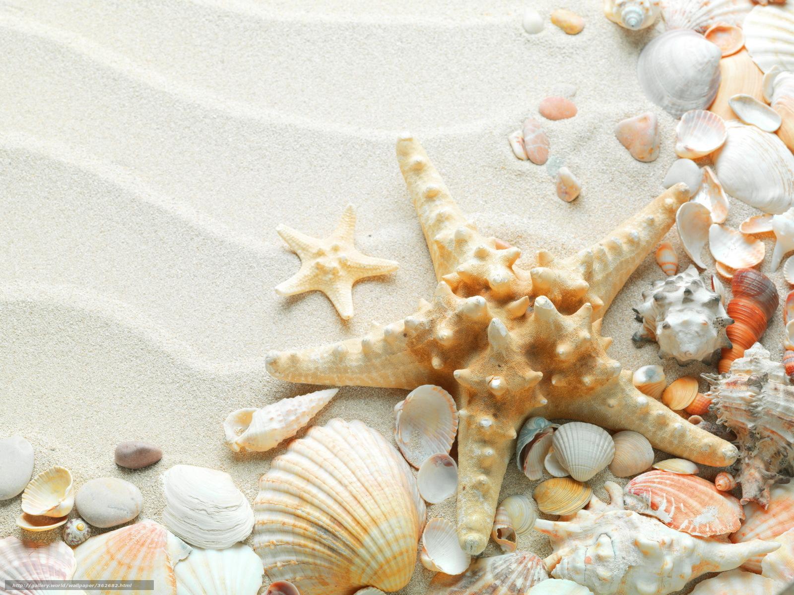 Звезда ракушки красивые песок пляж
