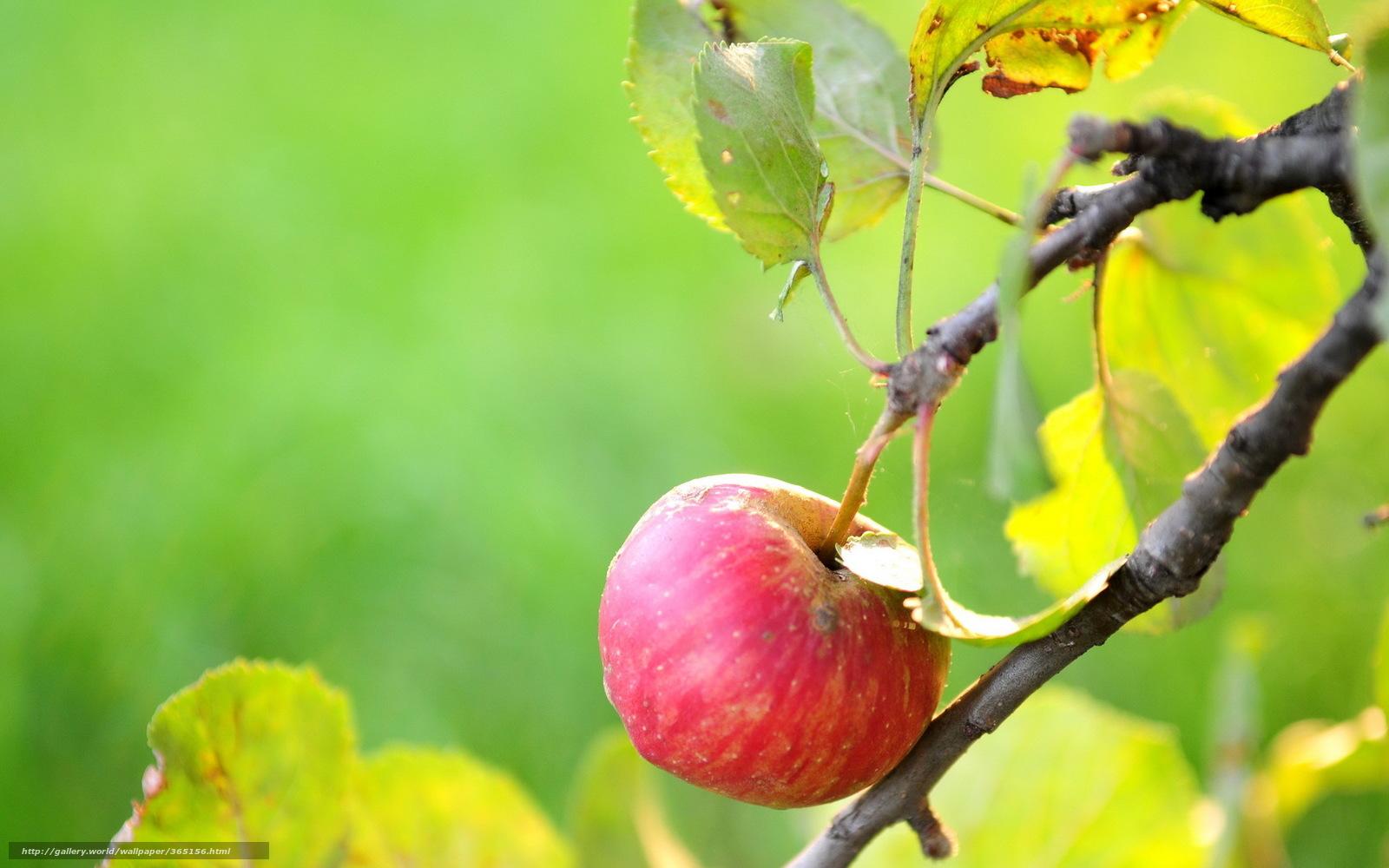 Села раскрытой дыркой на яблоко 2 фотография