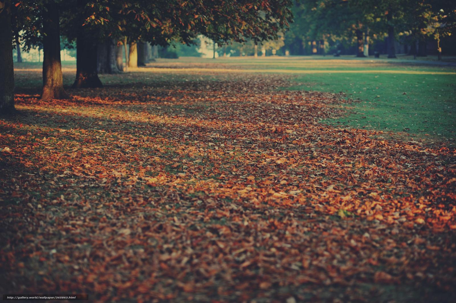 Форма листя дерев фото 28 фотография