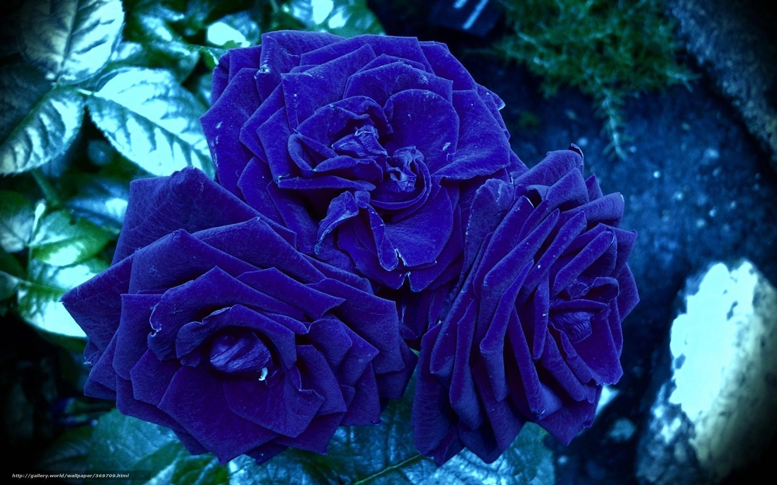 How to make Paper Rose flower bokeh step   YouTube
