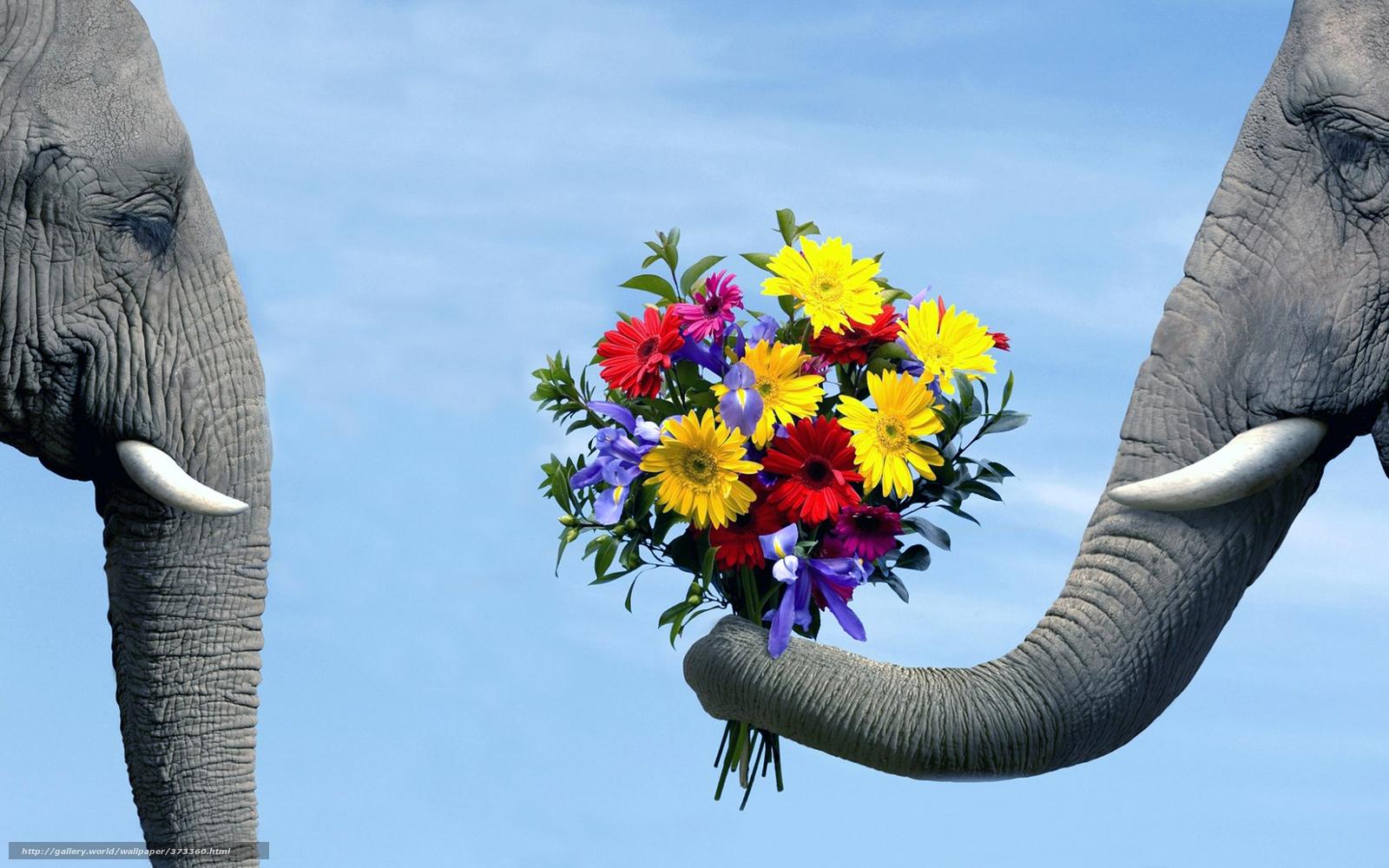 Хобот бивни слоны любовь ухаживание