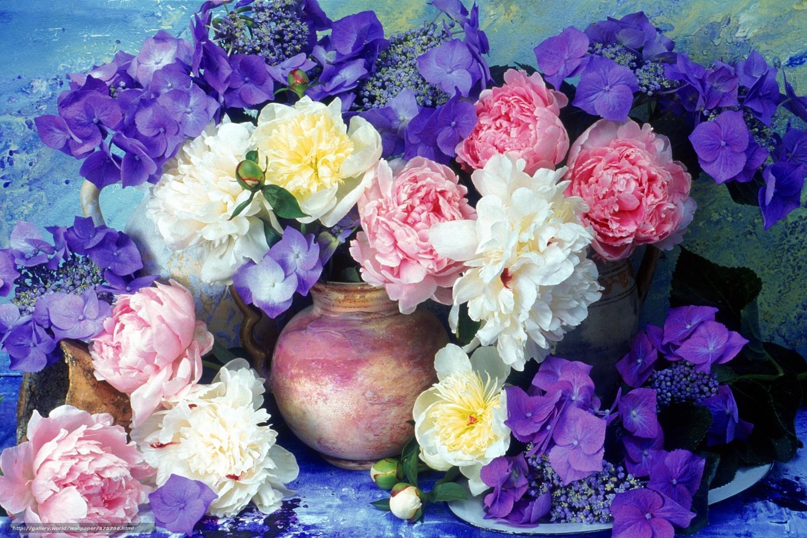 Цветы пионы самые красивые картинки - 14