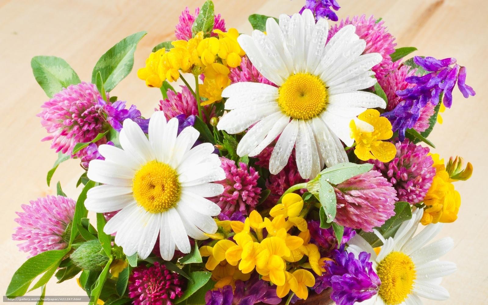 Ромашки букет клевер цветы желтые