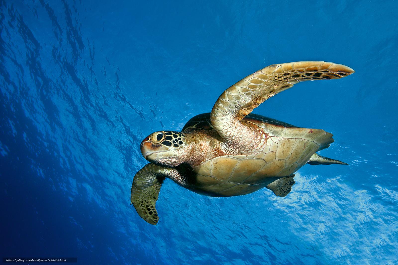 Вода океан море подводный мир