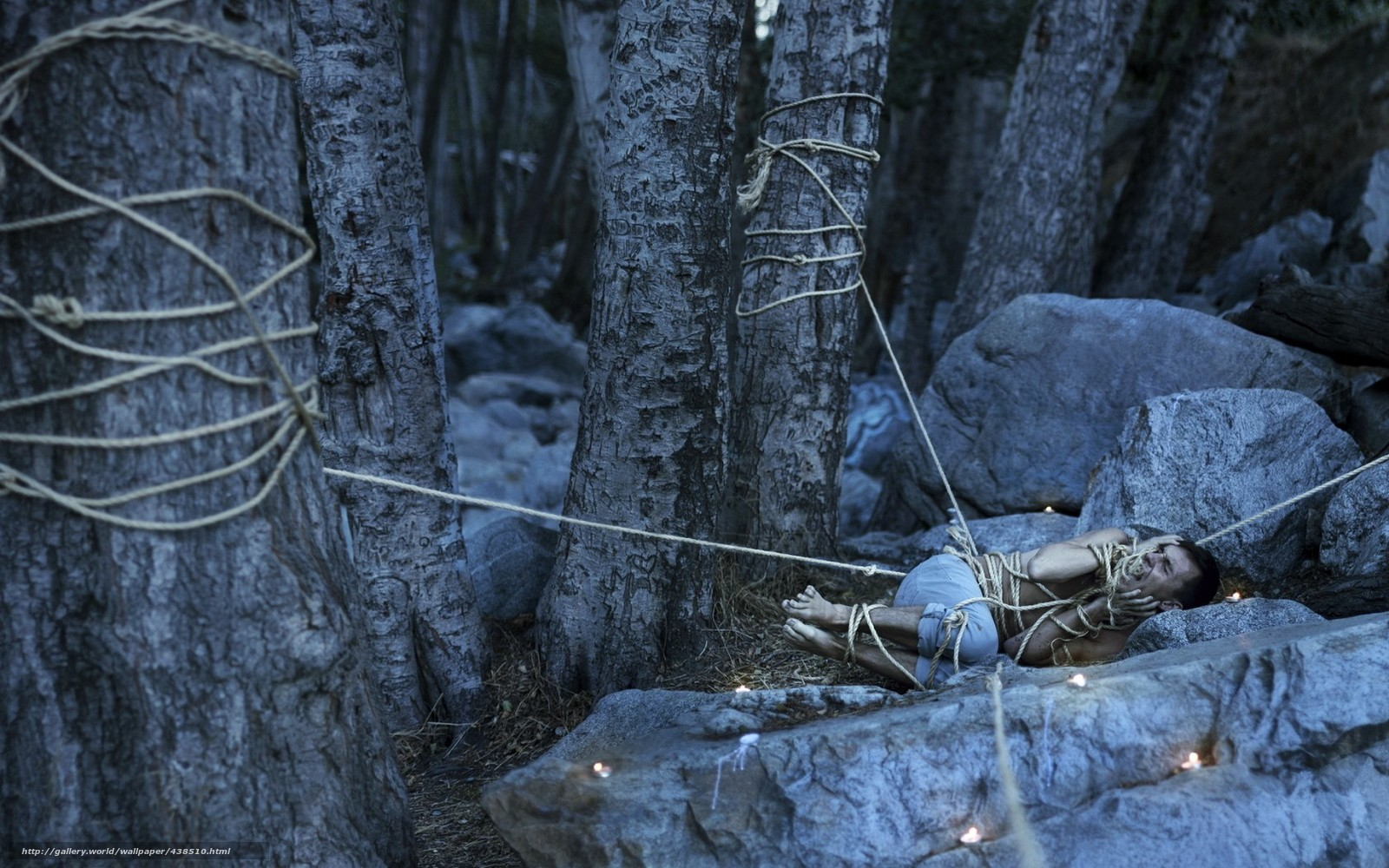 Фото связанные в лесу 8 фотография