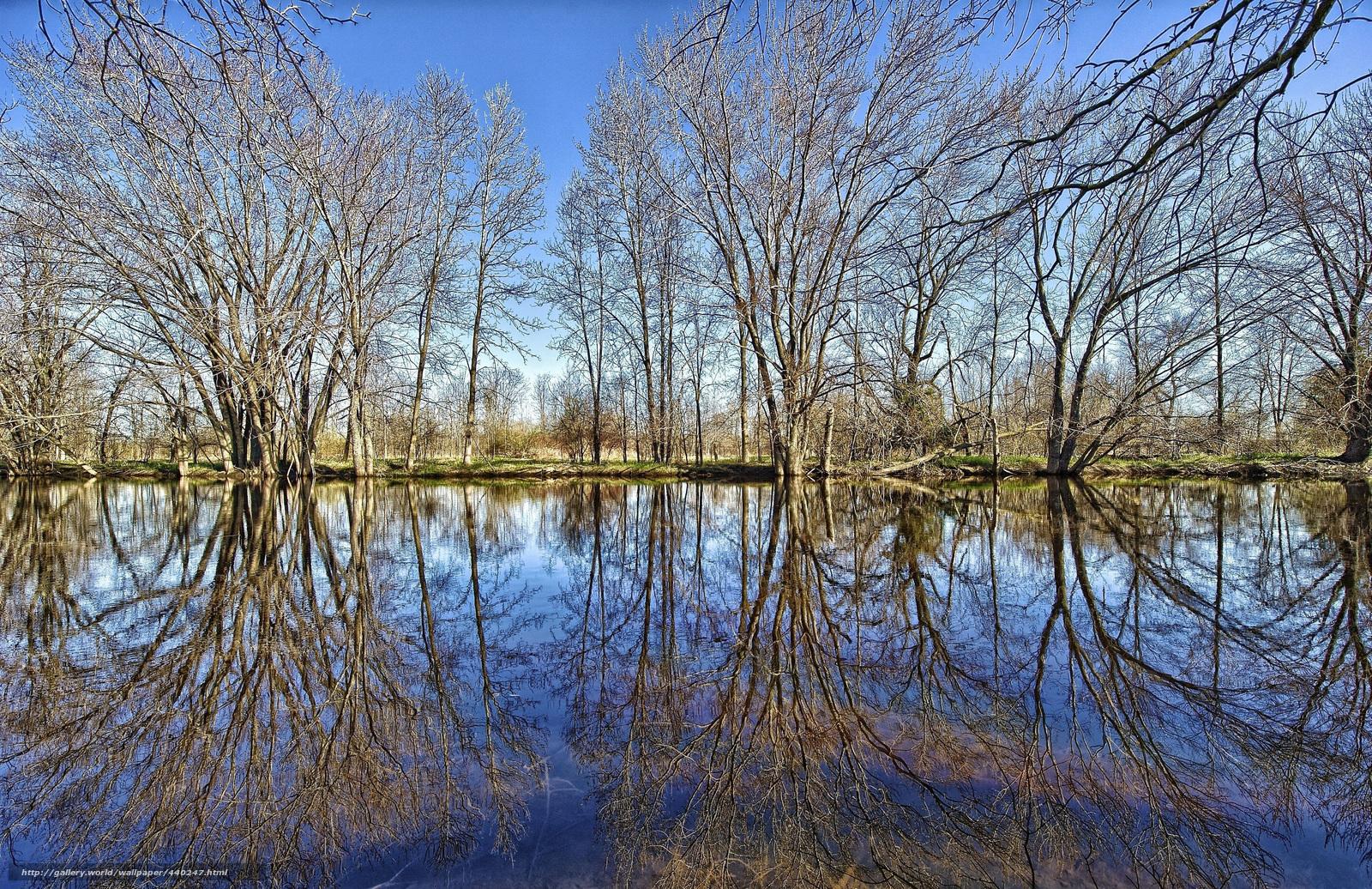 Озеро пруд водоём отражение лес