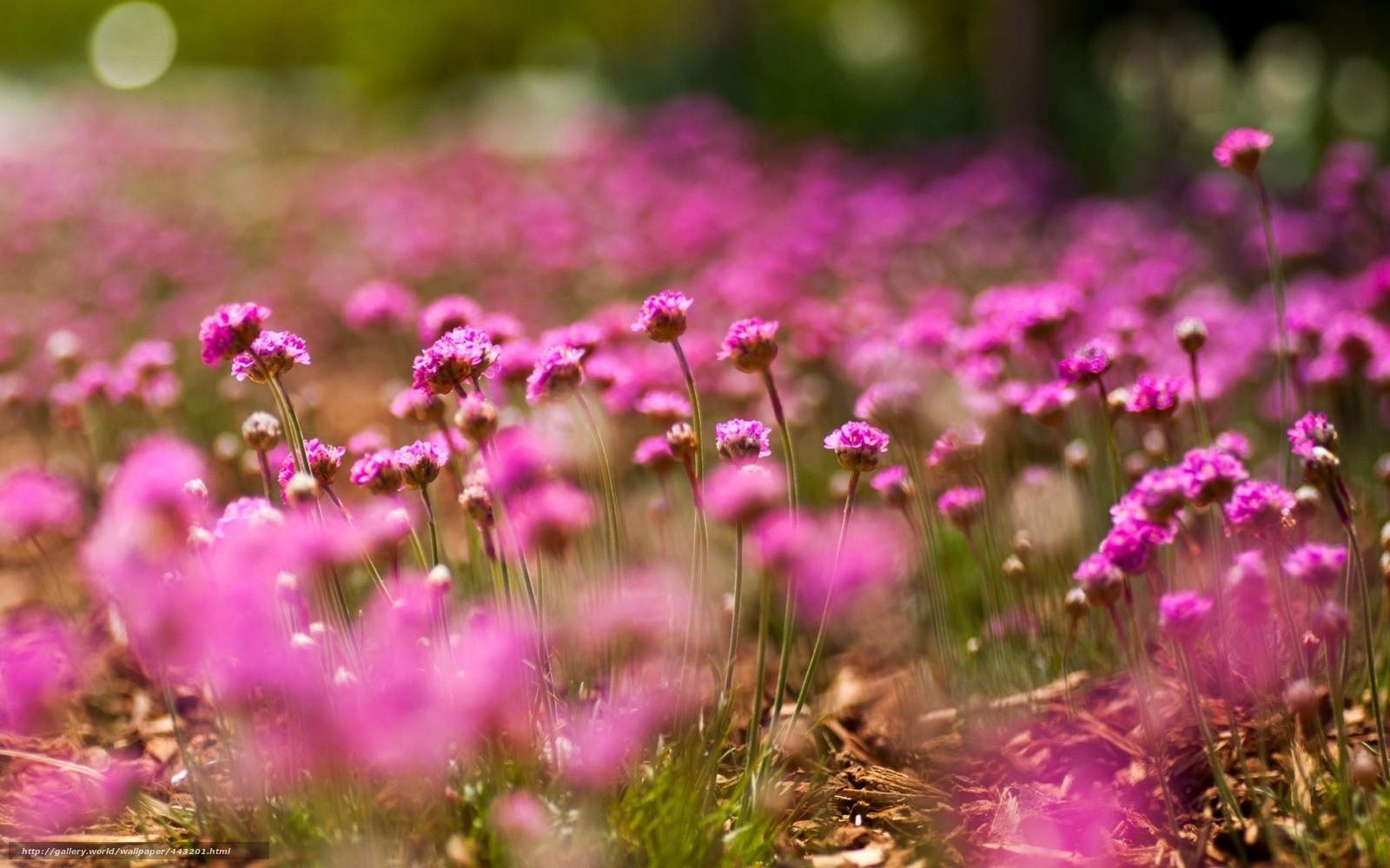 цветы фото макро: