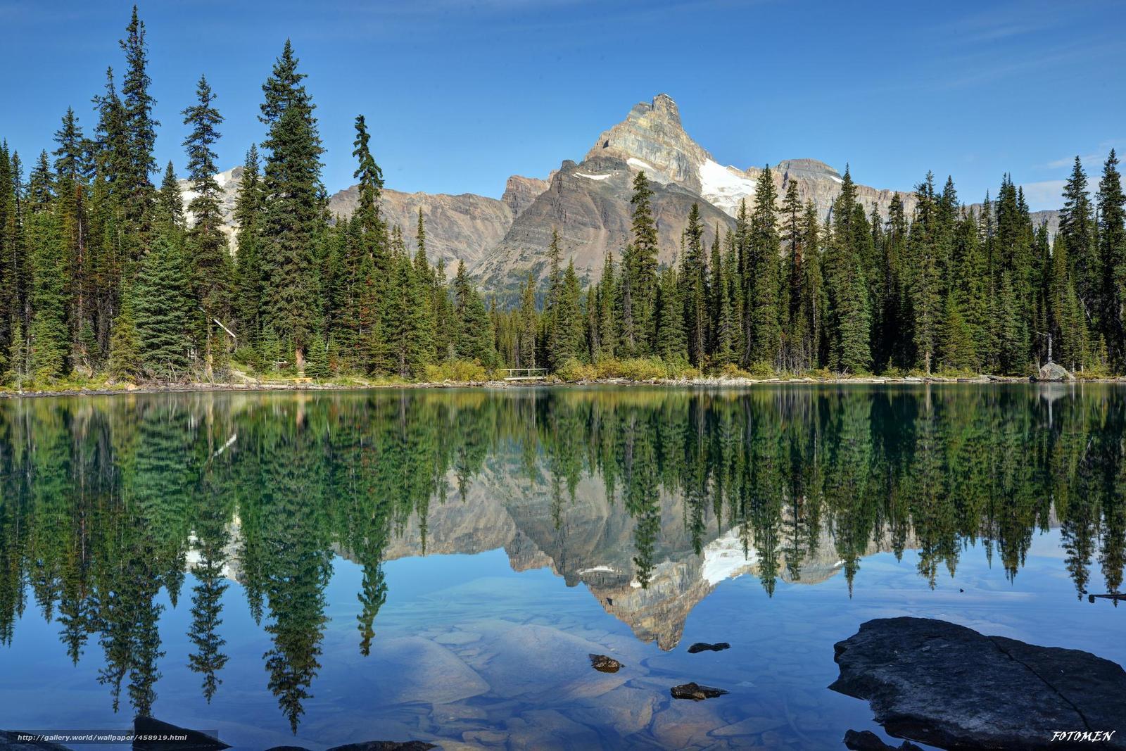 Канада озеро отражение лес ели горы