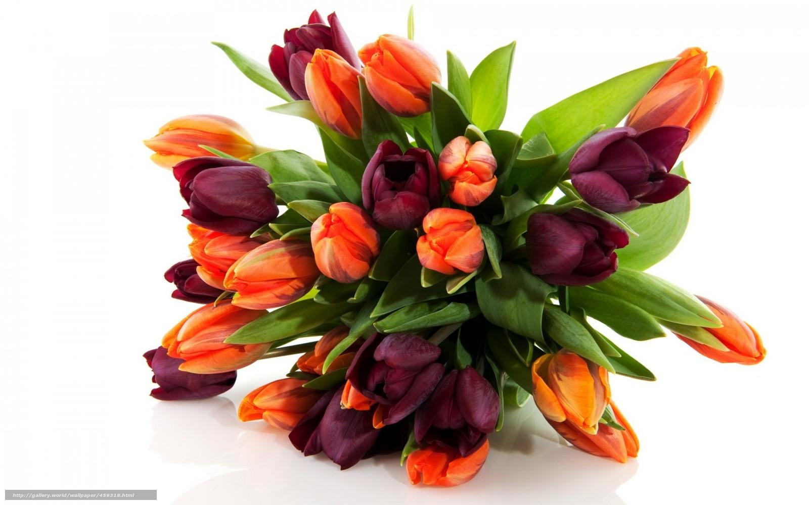 Цветок букет тюльпаны природа весна