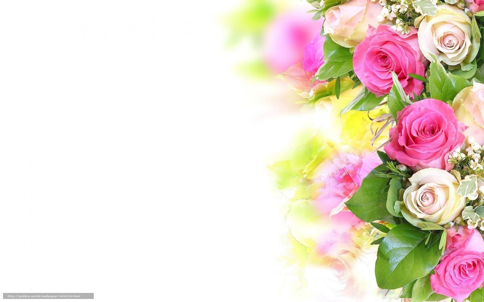 Розы розовые белые красивые цветы