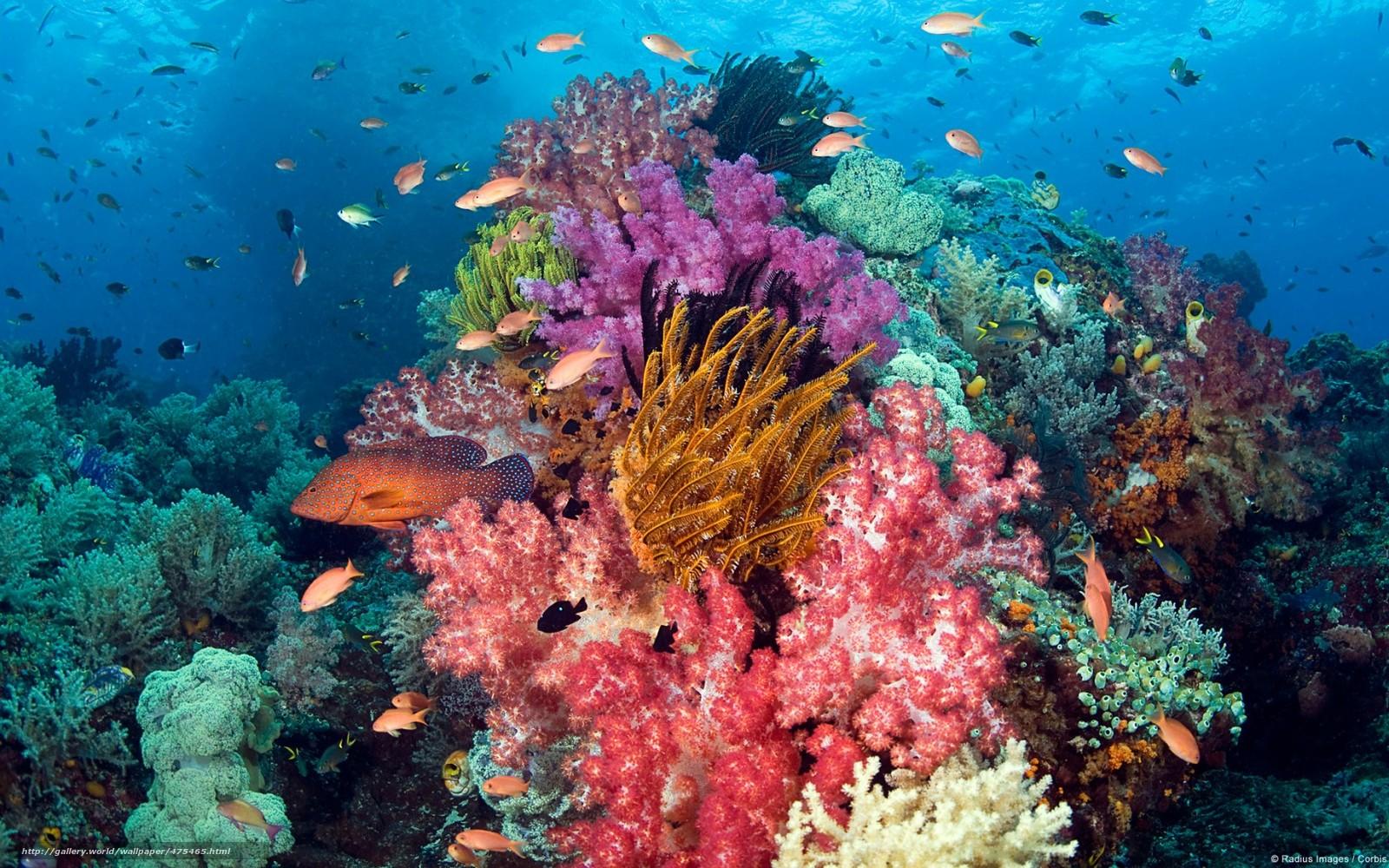 Подводный мир рыбки кораллы риф