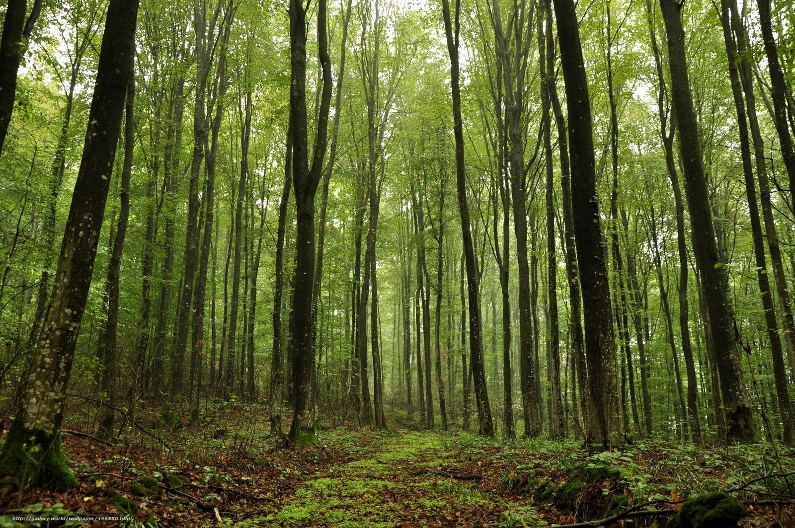 Фотки в лесу 9 фотография