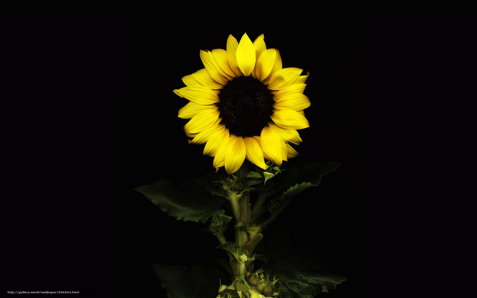 Sunflower Tumblr Backgrounds Wallpaper  paperliefcom