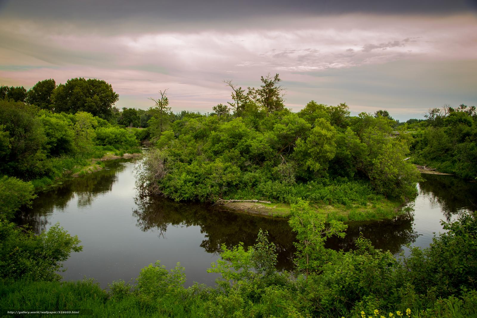 кусты над рекой