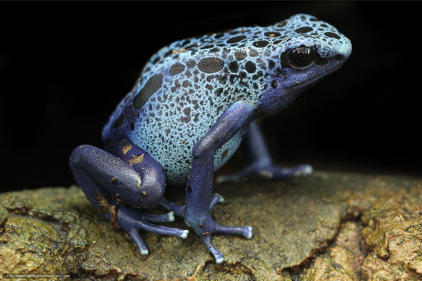 Basics Keeping amp Breeding Poison Frogs   Poison dart frog
