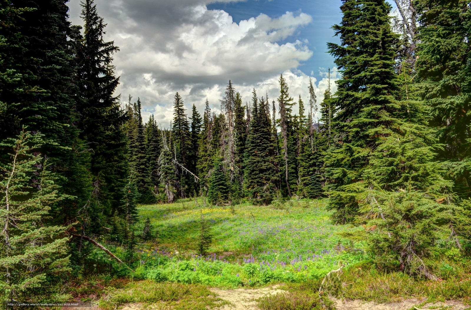 фотообои лес: