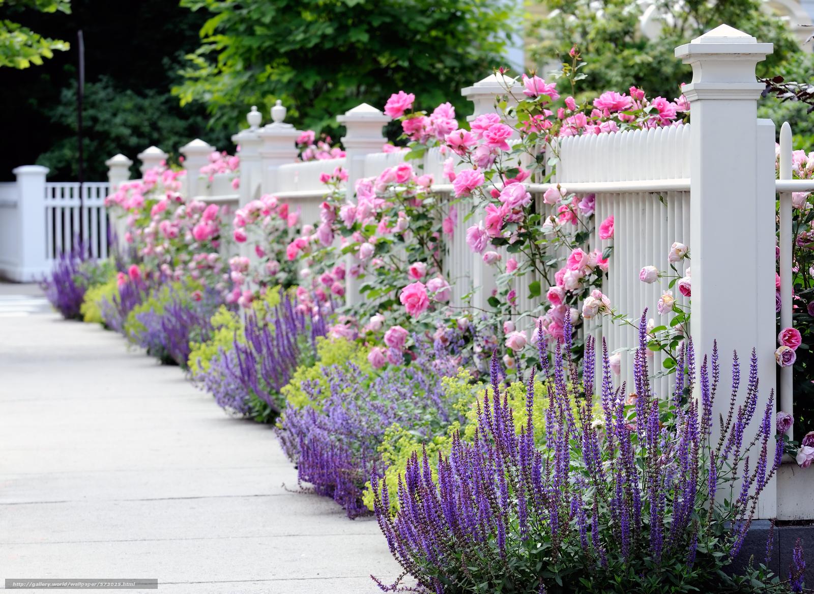 Посадка цветов в саду 25 фотография
