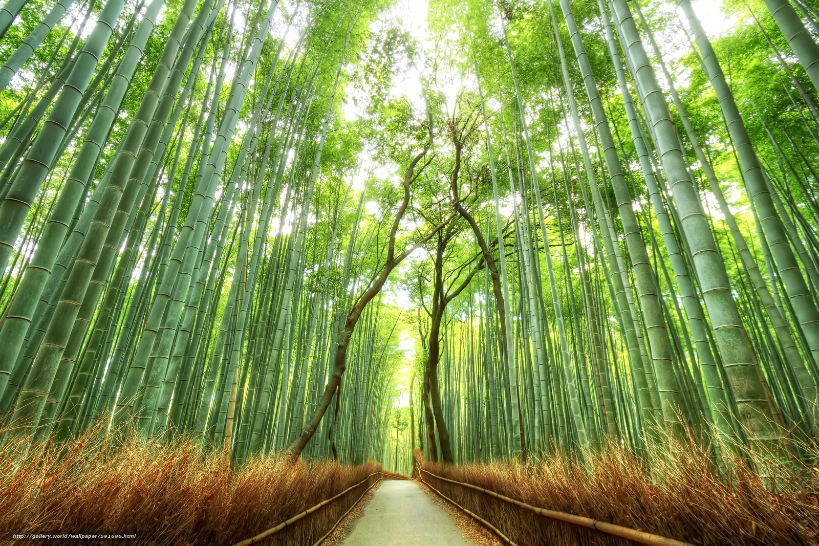 TLOU2 Beautiful Forest HD Desktop Wallpaper Using