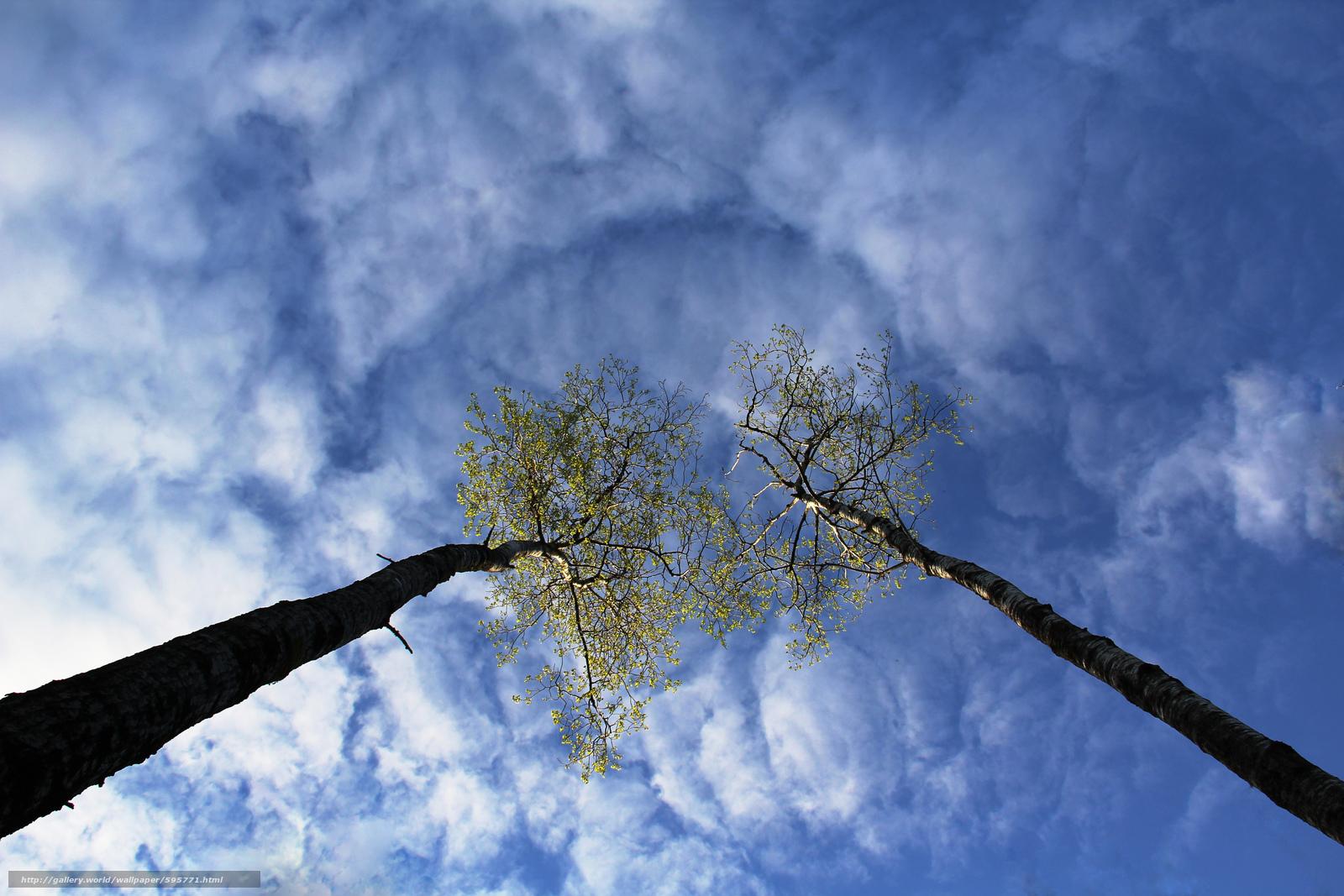 Природа небо облака деревья природа