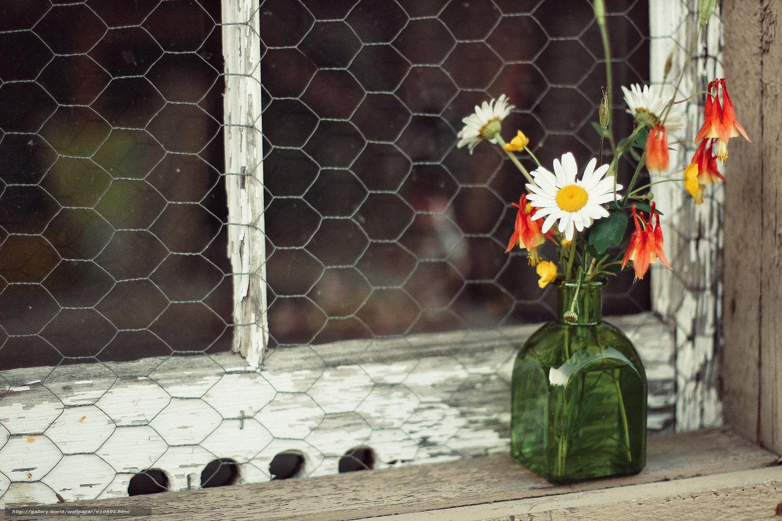 Скачать обои полевые цветы, ромашки, букетик, пузырёк, окно бесплатно для рабочего стола разрешением 2048x1365 —  картинка № 610801