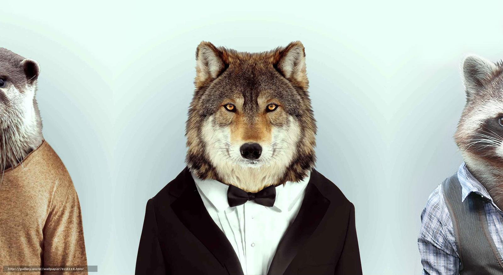 Волк, енот, бобер, совместное, лесные, кенты