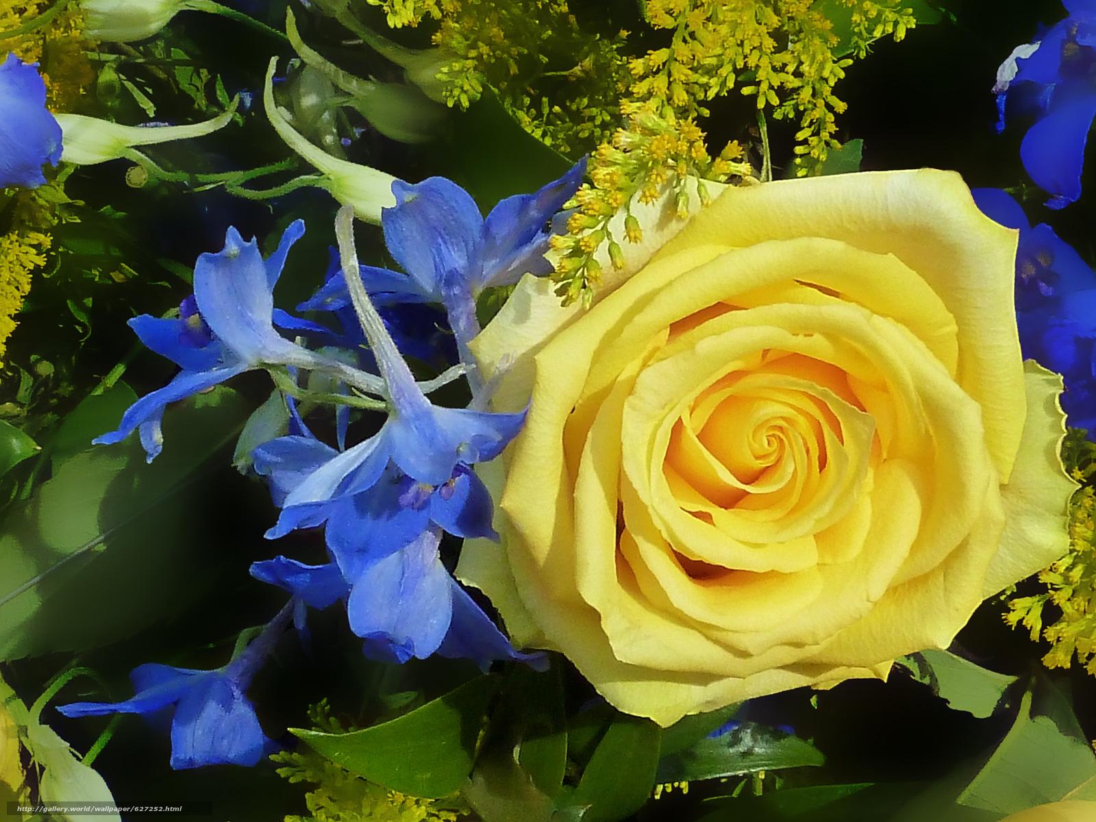 роза, цветы, флора