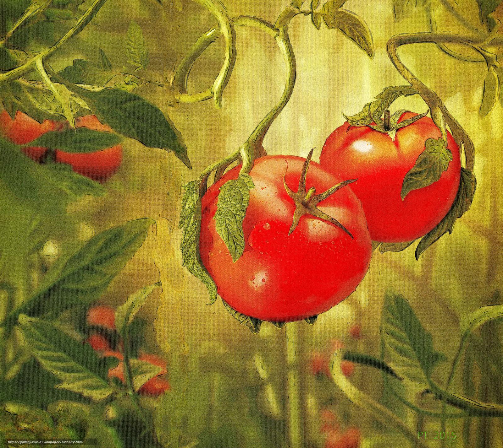 овощи, помидоры, живопись