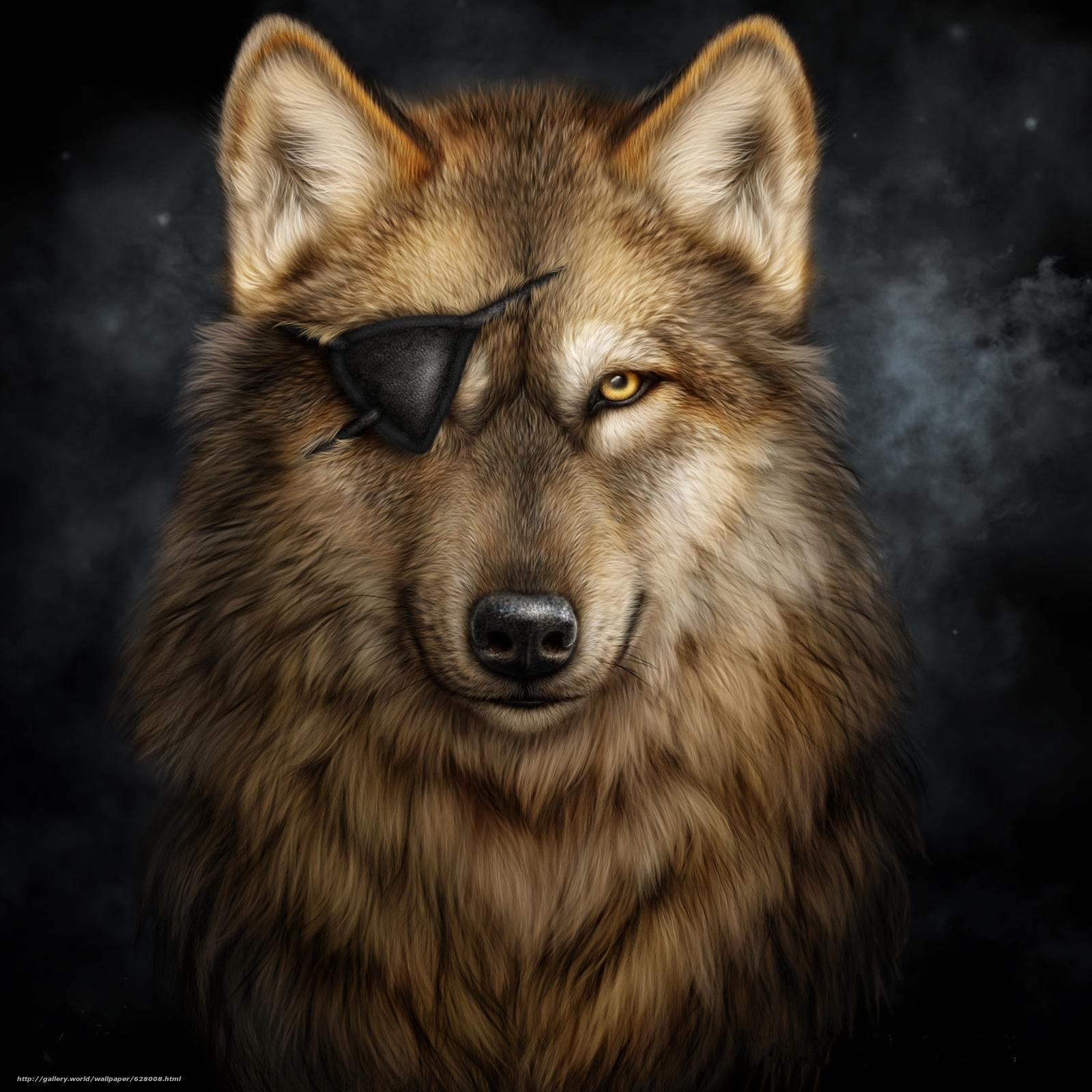 волк, без глаза, art