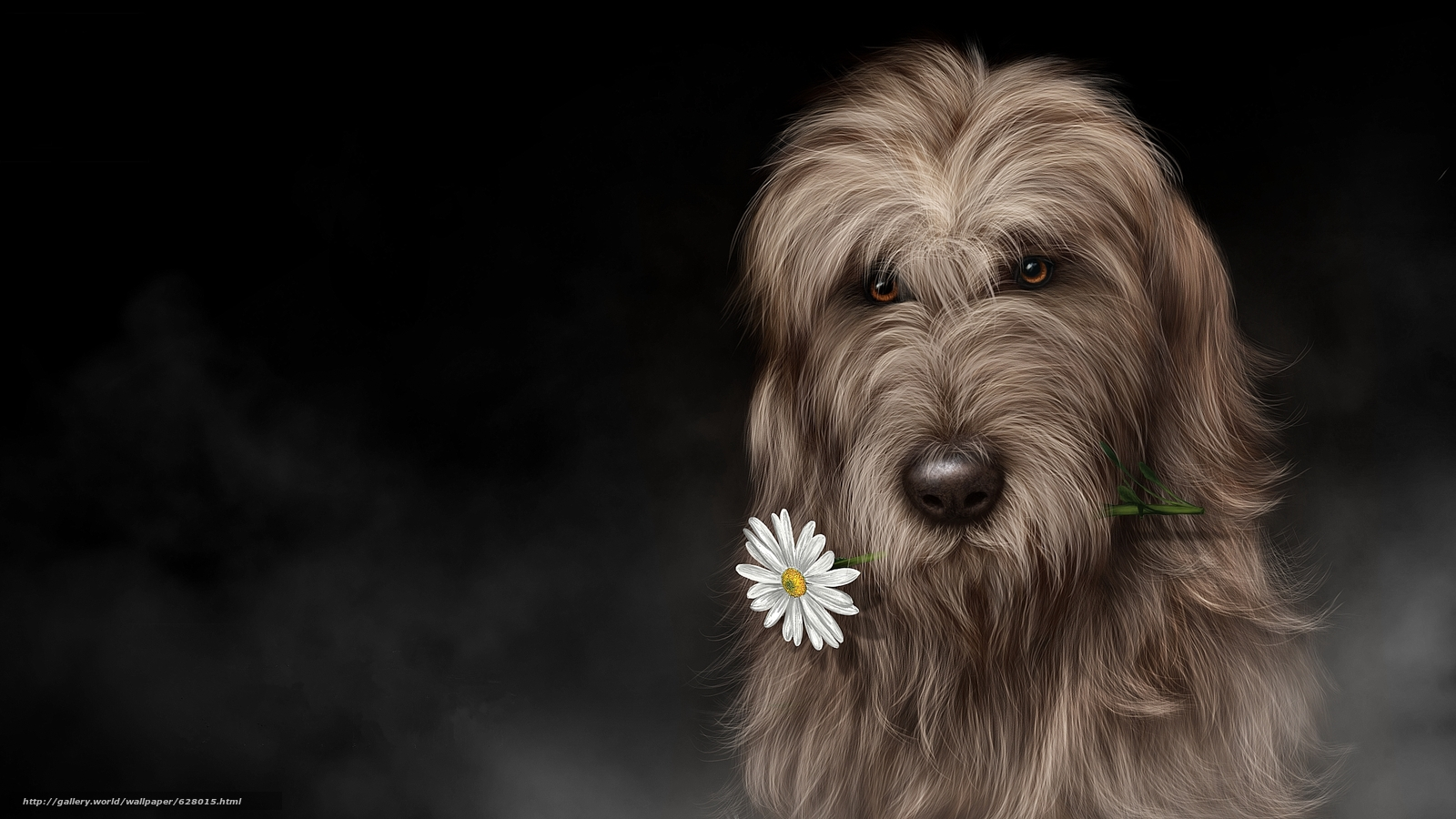 Ирландский волкодав, art, собака