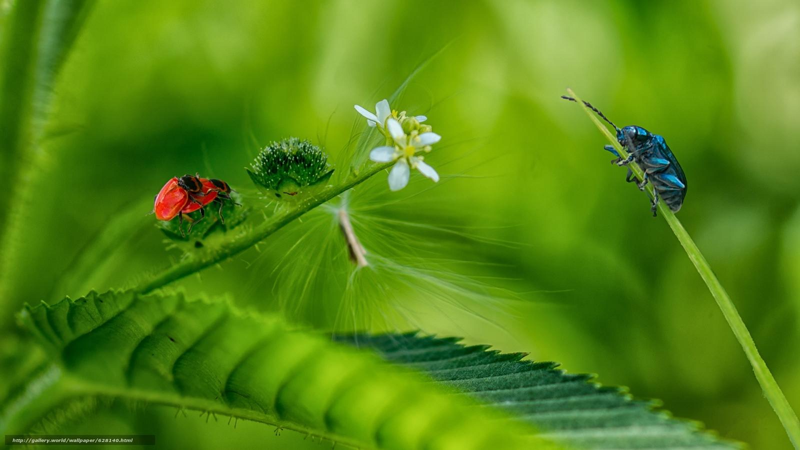 лист, цветы, жуки, макро