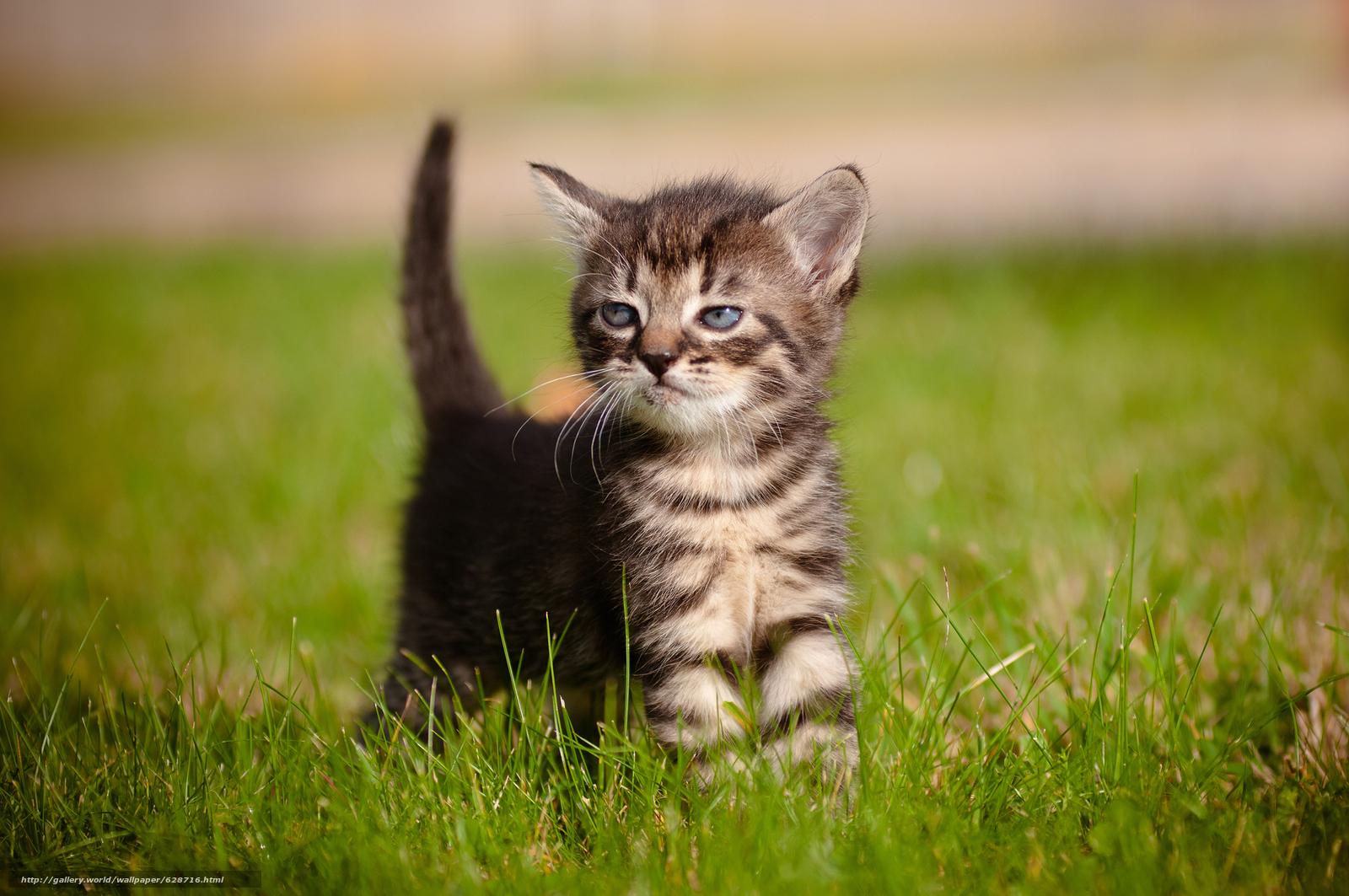 котёнок, малыш, трава