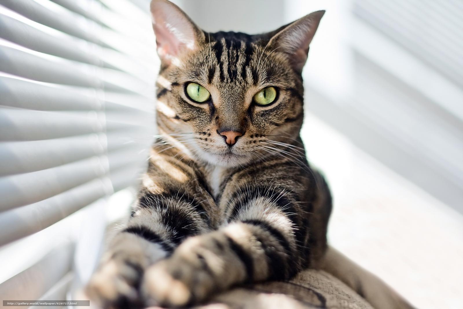 кот, кошка, взгляд