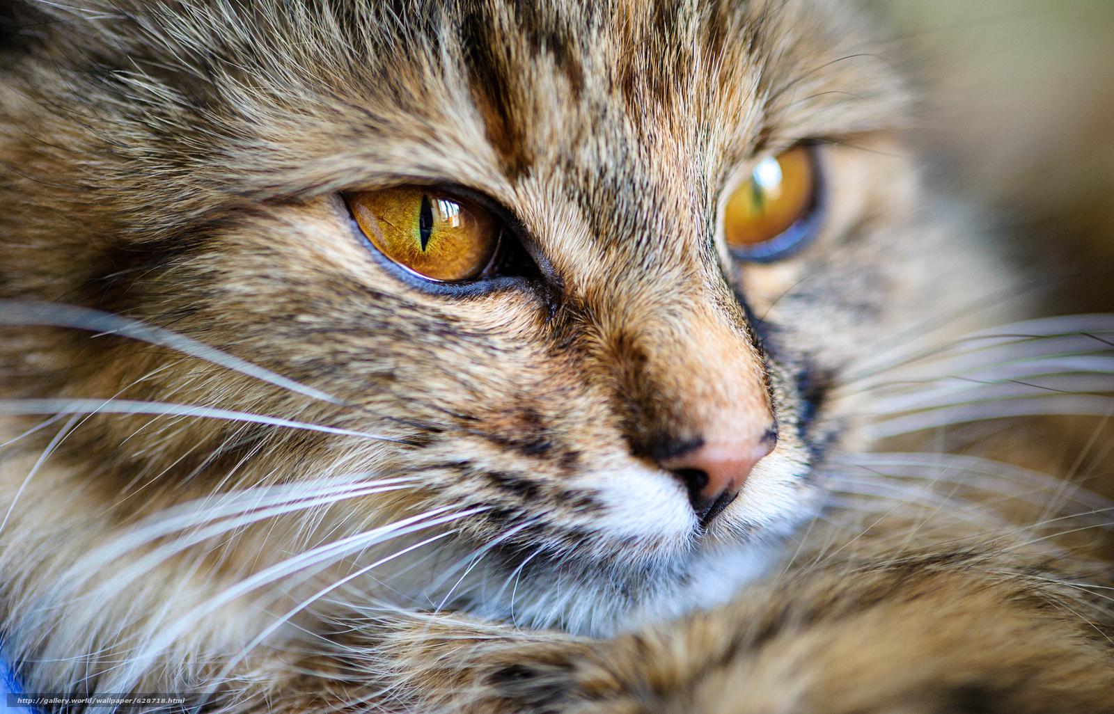 кот, кошка, морда