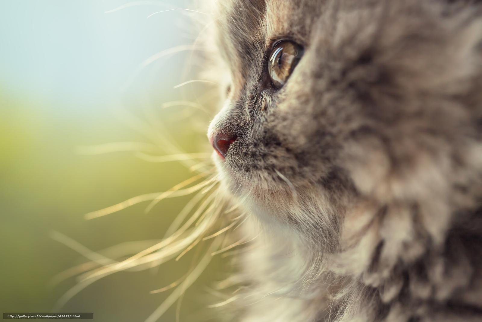 кот, кошка, мордочка, макро