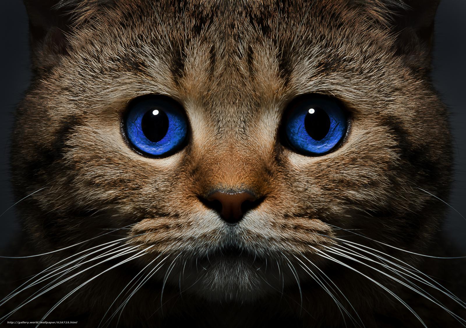 кот, кошка, морда, голубые глаза, взгляд, усы