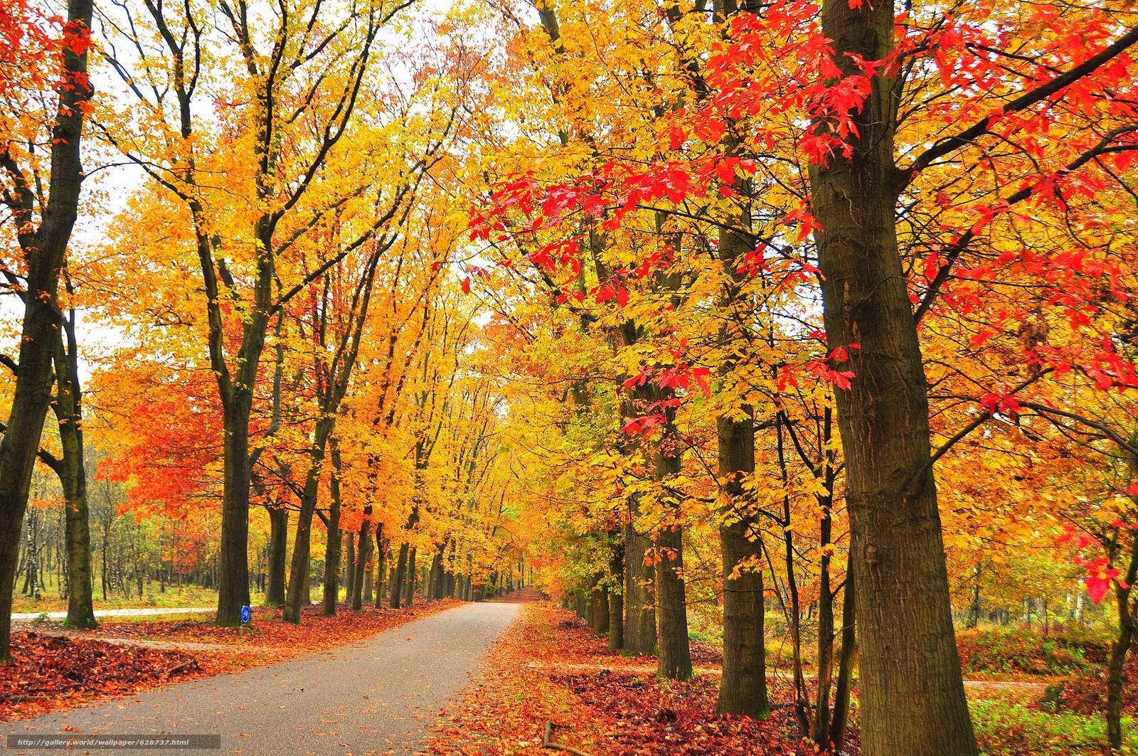 осень, парк, дорога, деревья, пейзаж