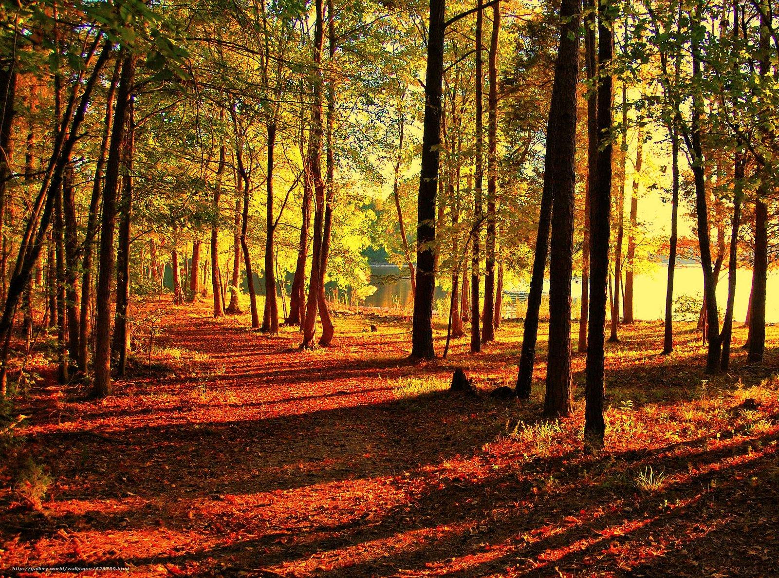 осень, парк, дорога, деревья, водоём, пейзаж