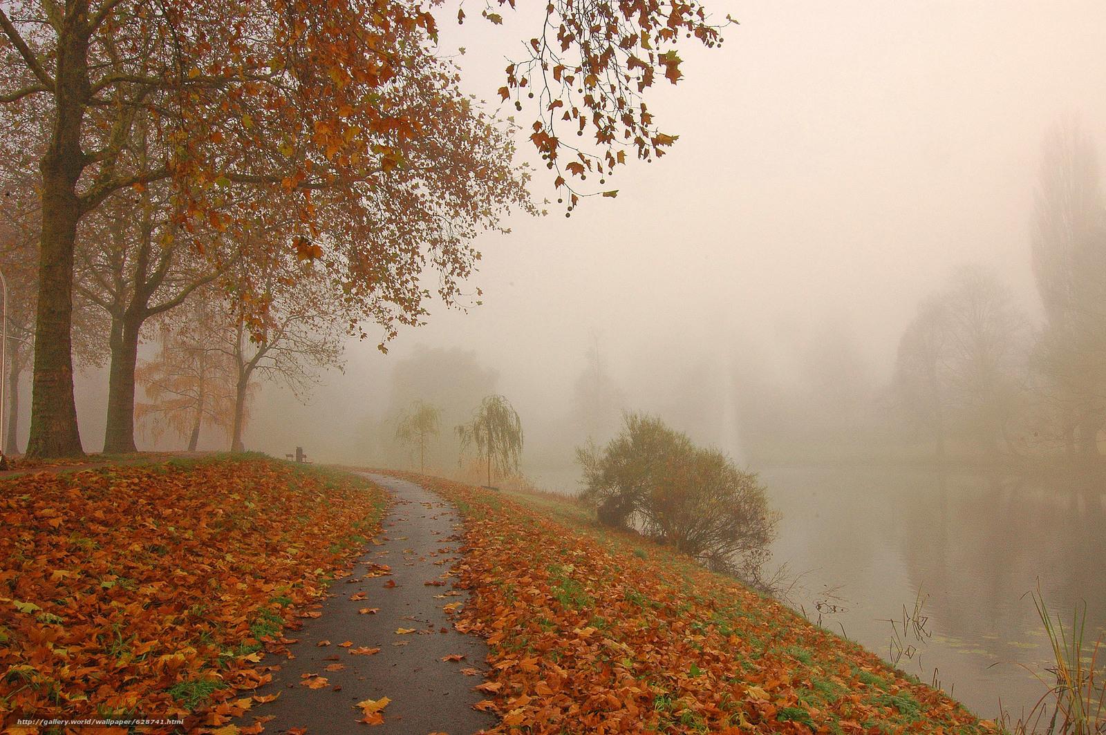 осень, дорога, парк, канал, деревья, туман, пейзаж