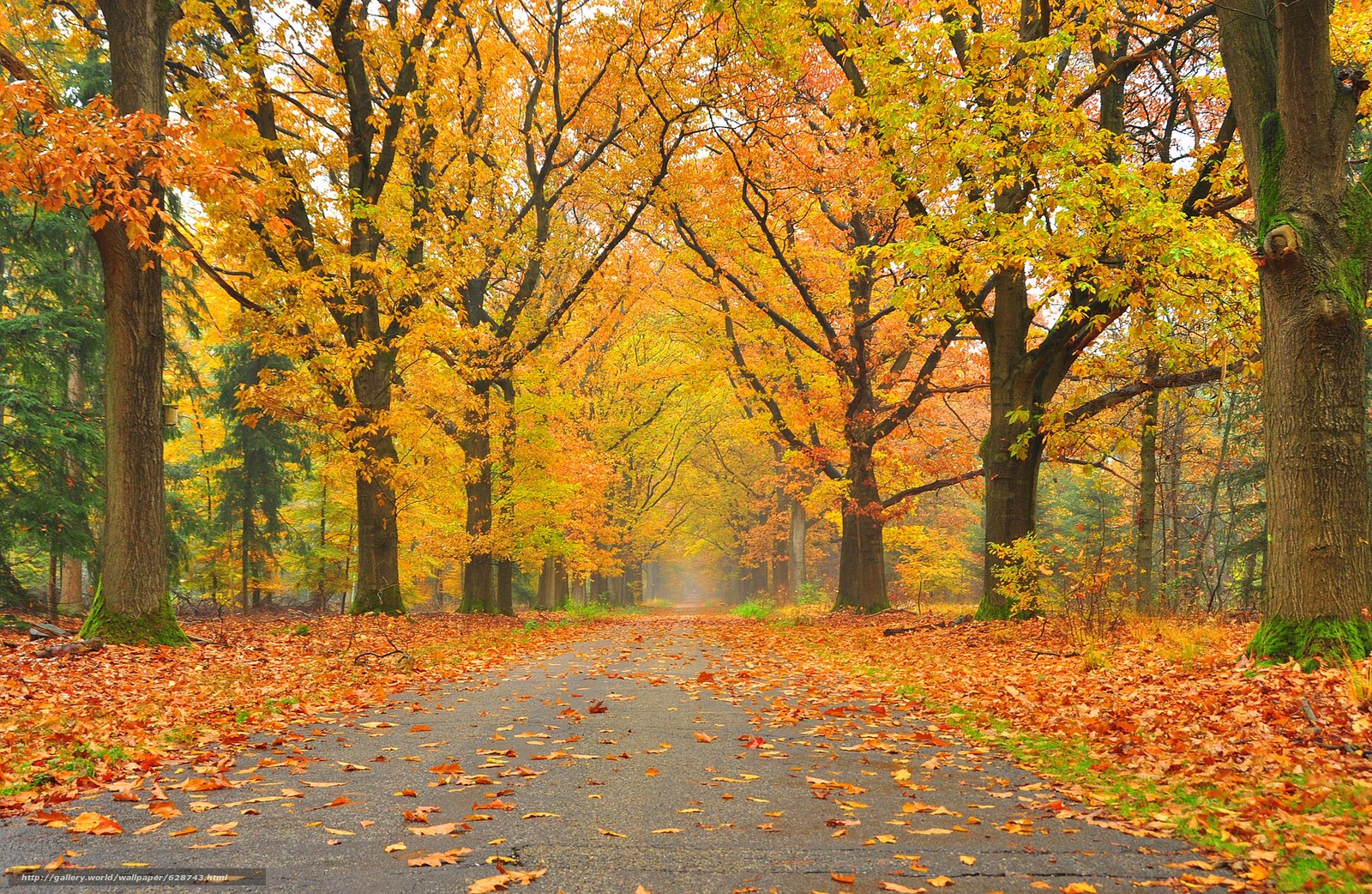 осень, дорога, деревья, парк, пейзаж