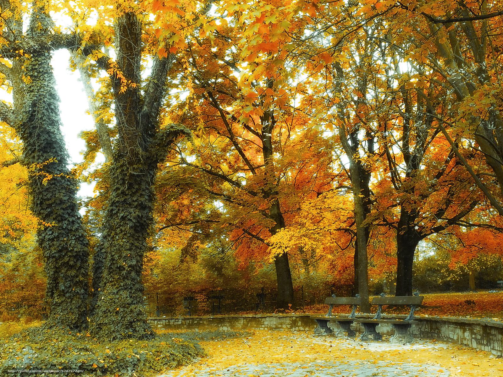 парк, осень, деревья, лавочки, пейзаж