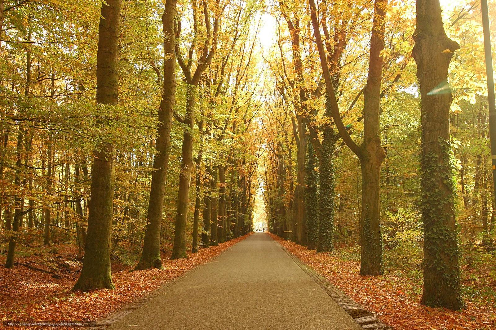 осень, парк, деревья, дорога, пейзаж