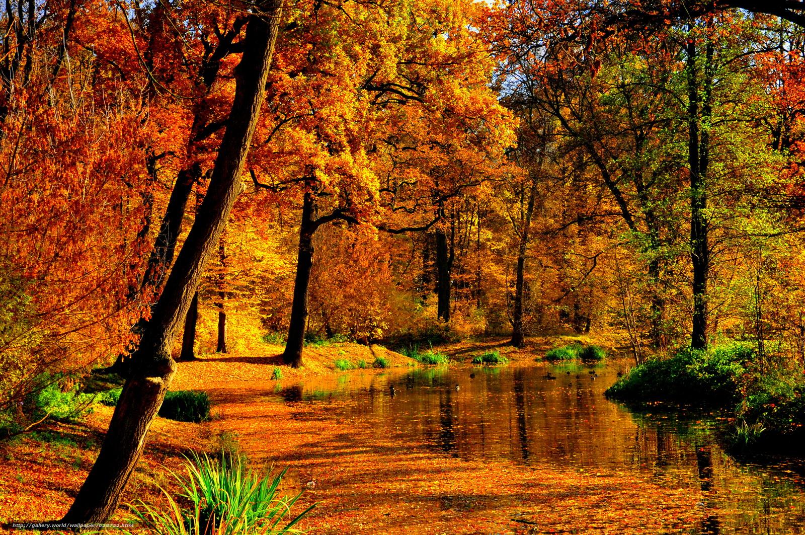 осень, лес, пруд, деревья, пейзаж