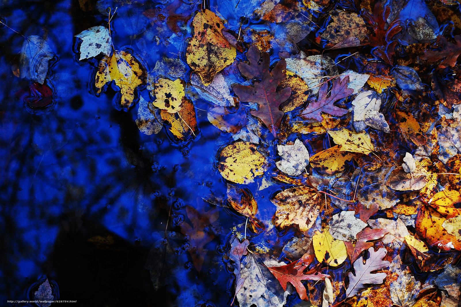 осень, листья, лужа, природа
