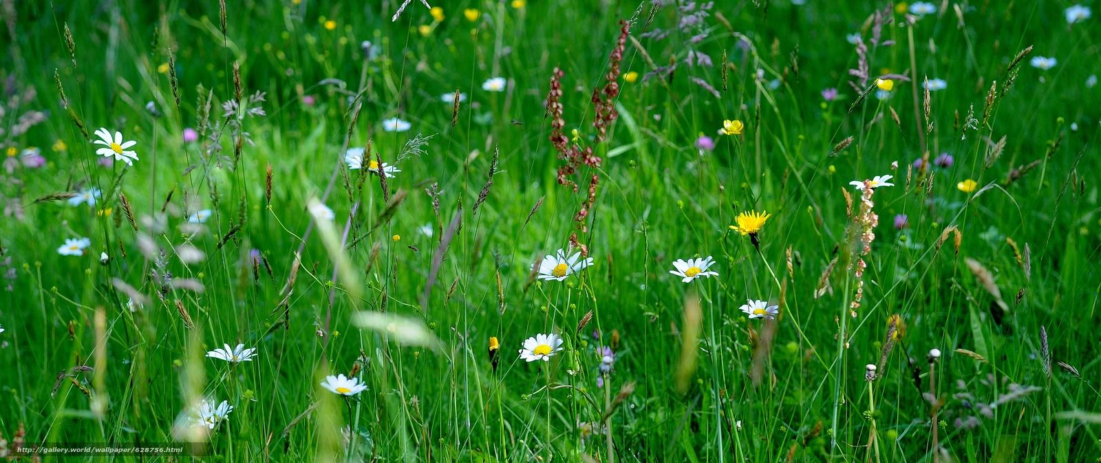поле, трава, цветы, макро