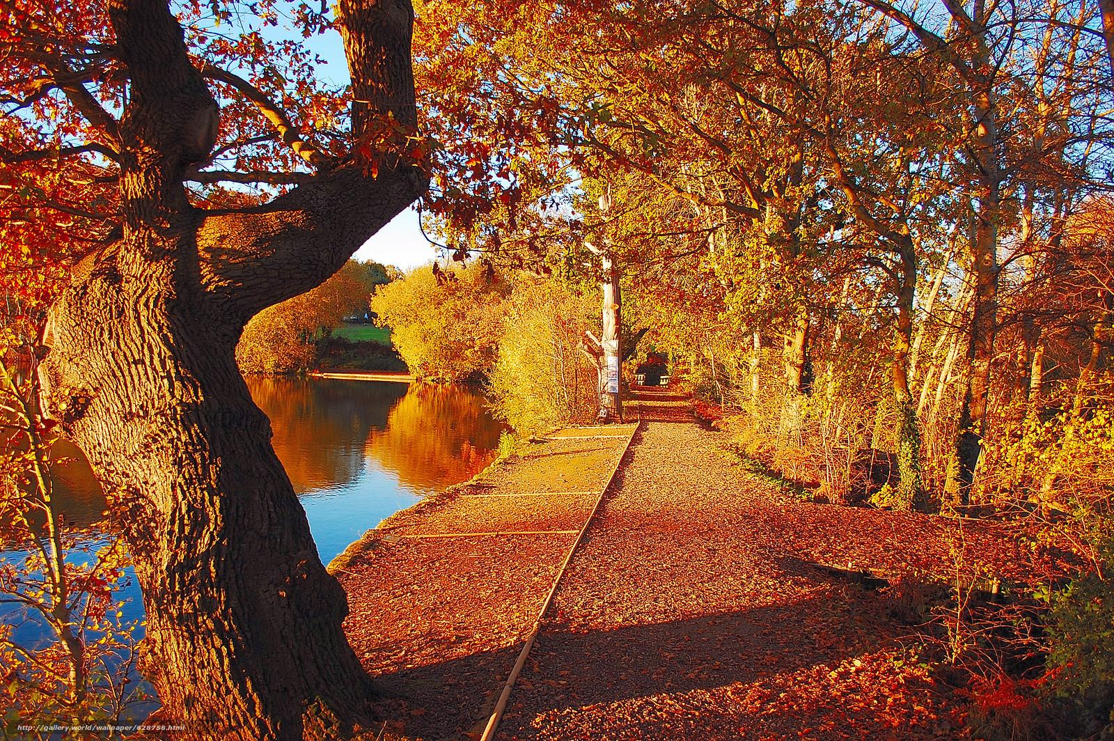 осень, пруд, деревья, парк, дорога, пейзаж