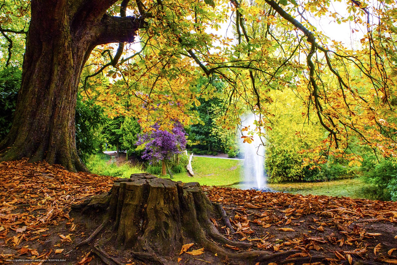 осень, парк, пруд, фонтан, деревья, пейзаж