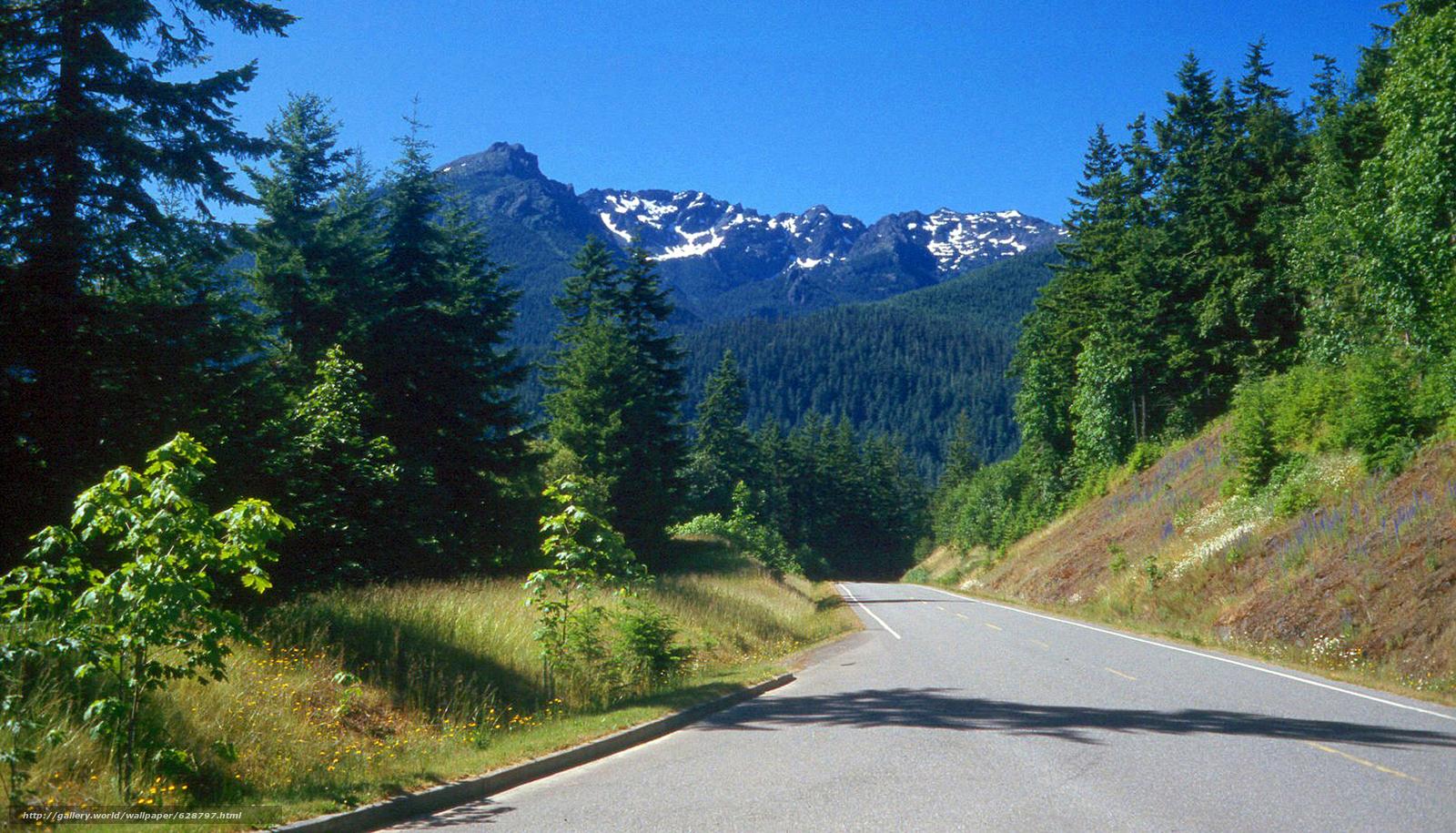 Olympic Nat Park, Washington, дорога, горы, деревья, пейзаж