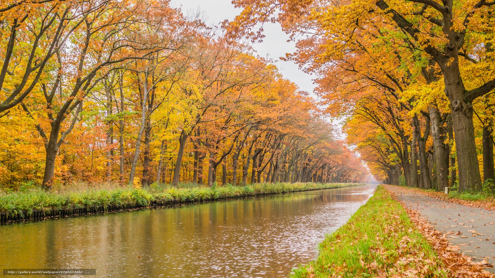 осень, канал, дорога, деревья, пейзаж